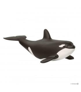 Pui De Orca