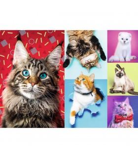 Pisicute Fericite, 1000 Piese