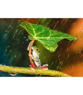 Umbrela Verde, 500 Piese
