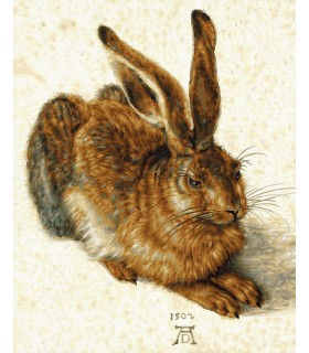 Young Hare De Albrecht Durer