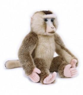 Macaque, 25 cm