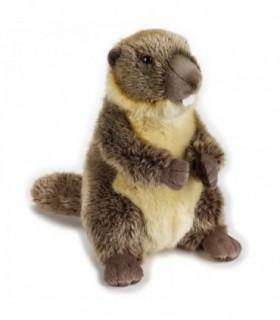 Marmota, 25 cm