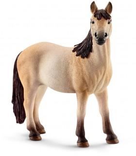 Iapa Mustang