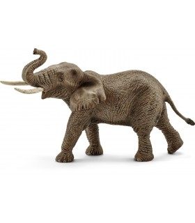 Elefant African, Mascul