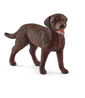 Labrador, Femela