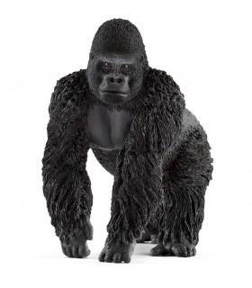 Gorila, Mascul
