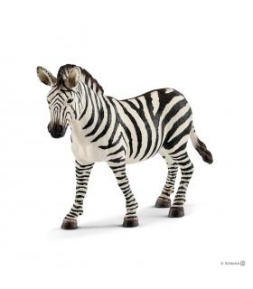 Zebra, Femela
