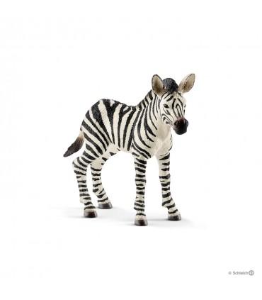 Pui de Zebra