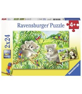 Koala & Panda