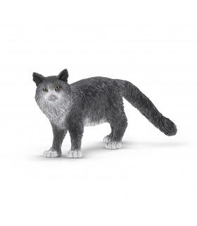 Pisica Maine Coon